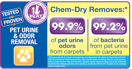 Pet Urine and Odor Removal Treatment by Southwest Chem-Dry in Marshall